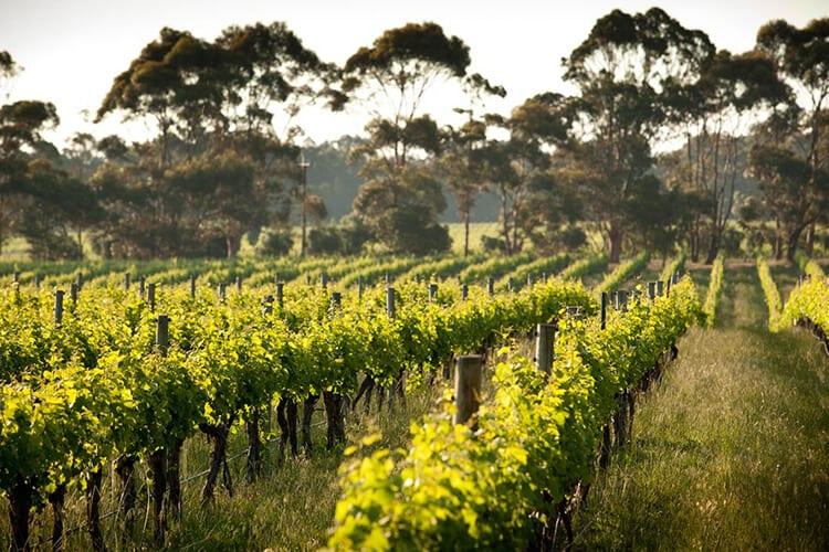 buy margaret river wine cape mentelle