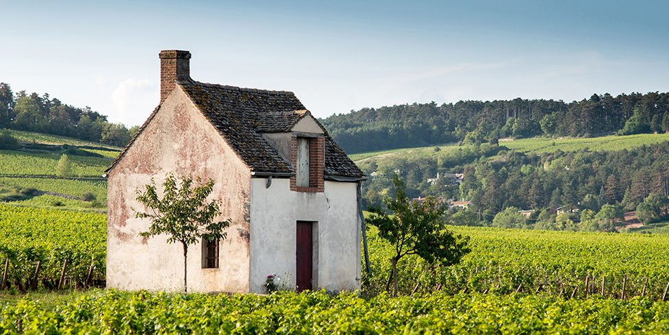 learn about burgundy wines