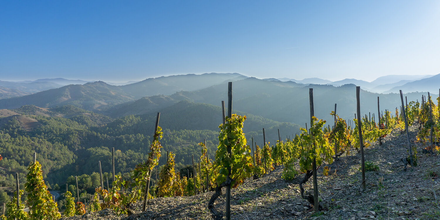learn about spanish wine melbourne