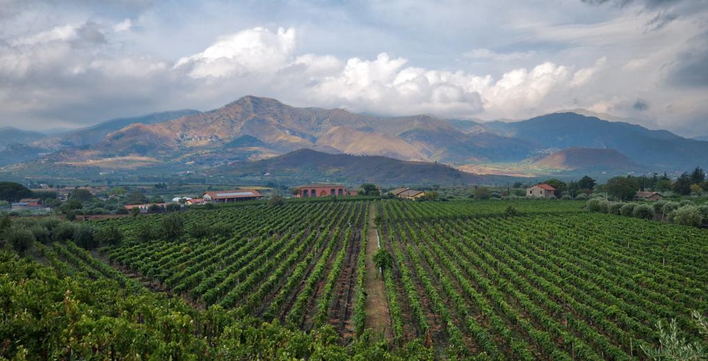 buy etna wines